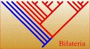BilateriaTREE.jpg, 13K