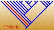 CnidariaTREE.jpg, 13K