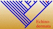 EchinodermataTREE.jpg, 13K