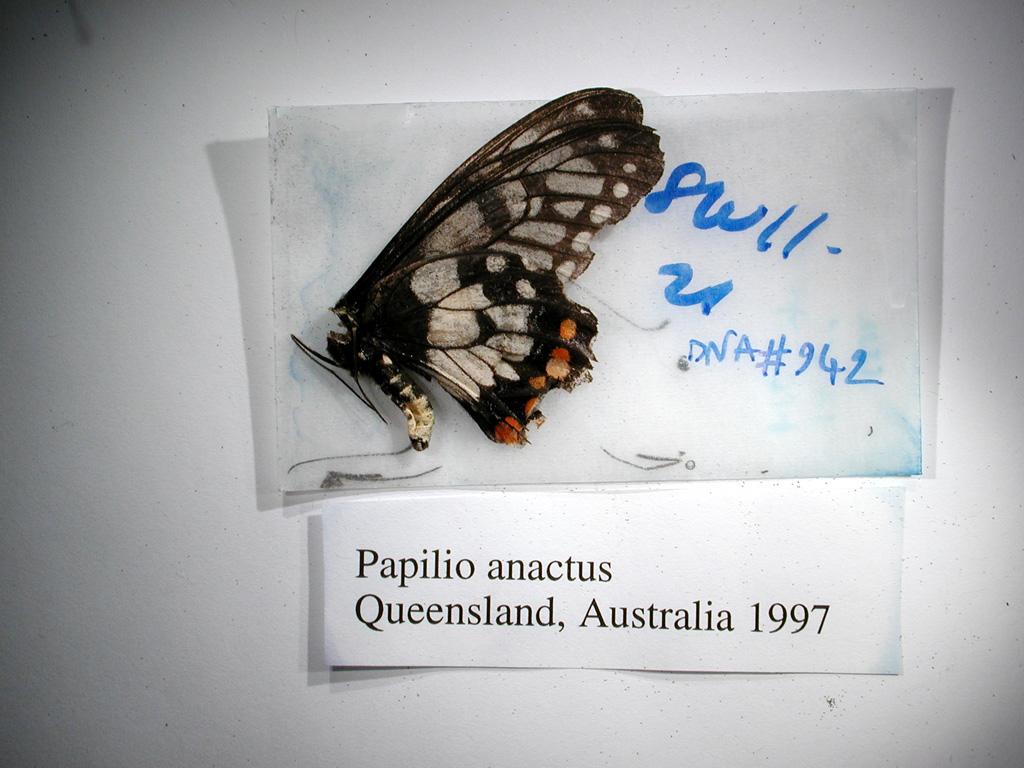 http://www.biology.ualberta.ca/facilities/strickland/vouchers/0942.JPG